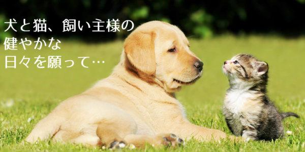 一般社団法人 犬猫の食と自然医療の学校 | 飼い主のためのキャリア・スキルアップスクール